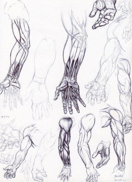 Penwork_anatomy