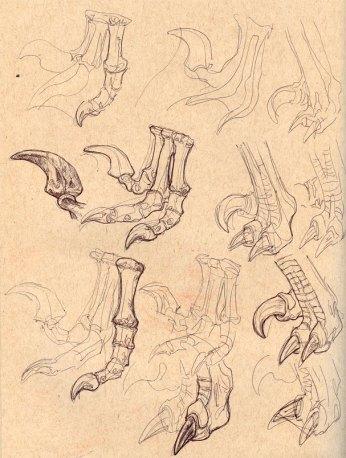 Raptor_Sketch_01